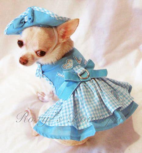 puppy dresses chic chihuahua fashion