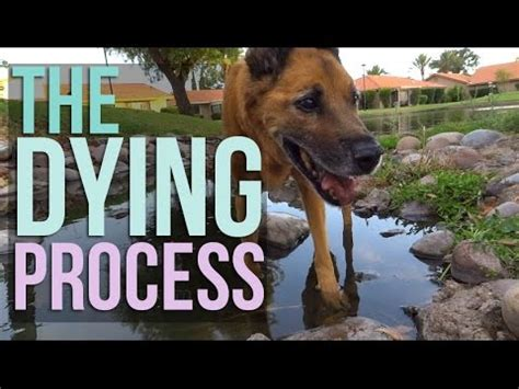 dying process 8 secret signs your pet is in funnycat tv