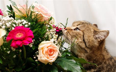 cat eating wallpaper un gato y rosas hd 2560x1600 imagenes wallpapers