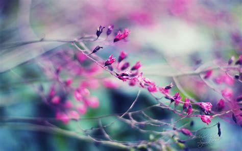 imagenes fondo de pantalla graciosas sfondi hd bellissimi fiore viola sfondi hd gratis
