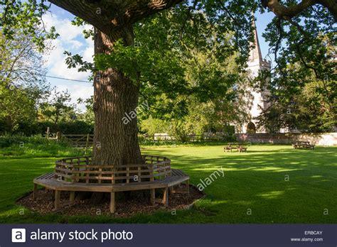 circular bench around tree a circular bench around an oak tree on a village green