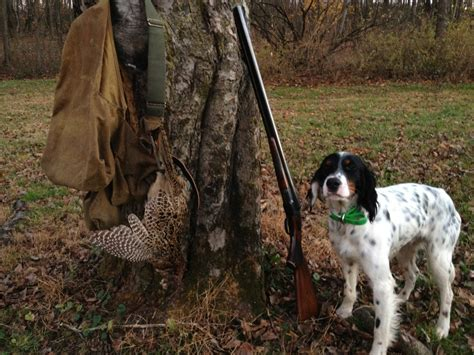 how to a to bird hunt a beagle to hunt birds 1001doggy