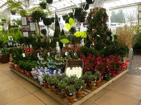 christmas plants squires garden centre twickenham