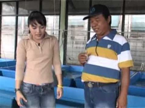 Bibit Lele Sangkuriang Banyuwangi tips budidaya ikan lele magelang resep mudah mening