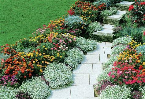 fiori da ombra perenni oltre 25 fantastiche idee su piante perenni su