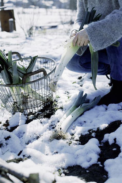 garten winterfest machen hortensien im garten winterfest machen garten winterfest