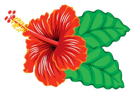 free image clipart hibiscus clip images free