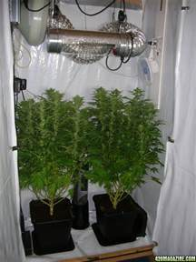 my grow in a wardrobe