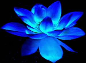 Blue Lotus Flower Meaning Interesting Conversations