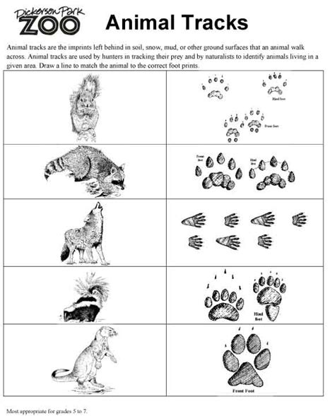 printable animal tracks flashcards animal tracks things to teach girls pinterest
