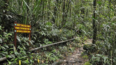 Borneo Vid rundresor malaysia med borneo hos orangutanger och