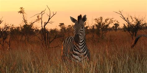 Finding In South Africa South Africa Safari Tours Adventures By Disney