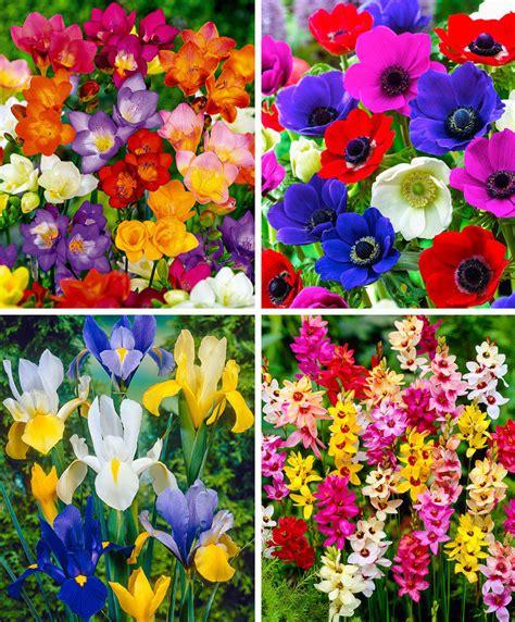 di fiore acquista confezione bulbi di fiori estivi bakker