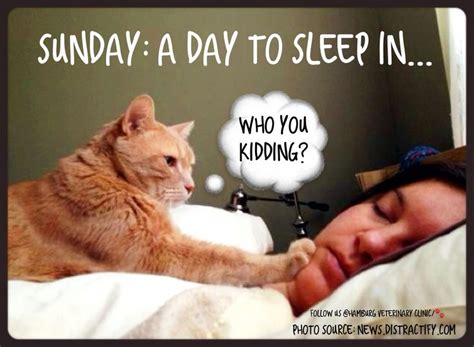 A Cat On A Sunday by Sunday Animal Humor Cat Hungry Cat Feed