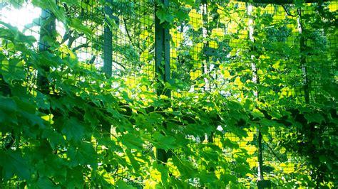 Origineller Sichtschutz Garten origineller sichtschutz f 252 r den garten 187 die sch 246 nsten ideen
