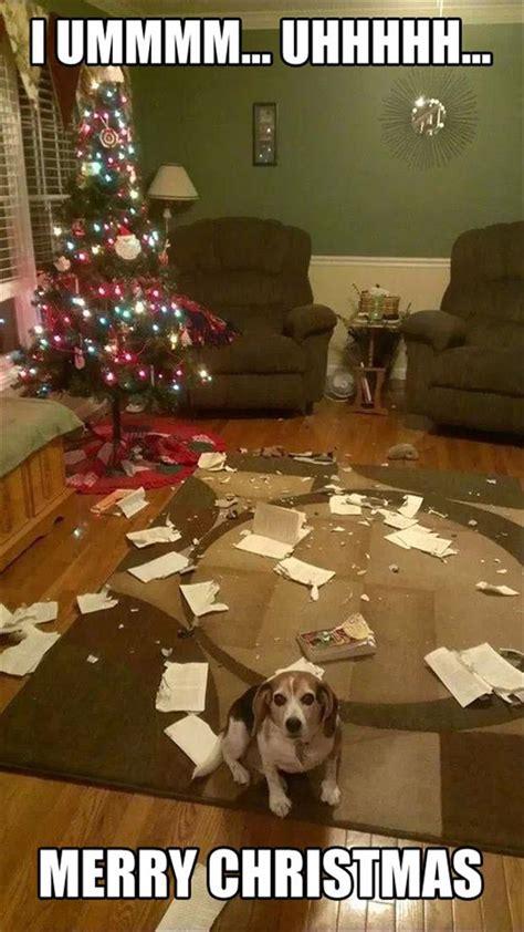 Christmas Dog Meme - 20 of the best christmas memes gifs on the internet
