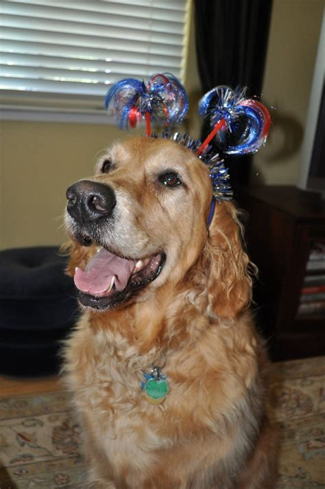 patriotic golden retriever 91 best images about true patriots on american pit american
