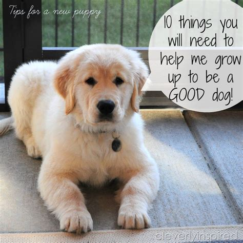 things to buy for a new puppy 10 things to buy to raise a puppy cleverly inspired