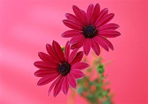 imagenes sorprendentes de flores minnie en rosa para imprimir imagenes y dibujos para