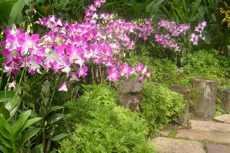 Orchid Garden by National Orchid Garden Singapore Image