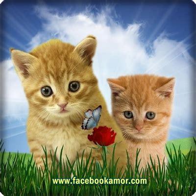 imagenes para perfil hermosas imagenes hermosas para perfil imagenesbellas