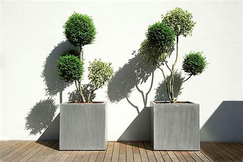 vasi per terrazzo siepi per terrazzi siepi terrazzi con siepi