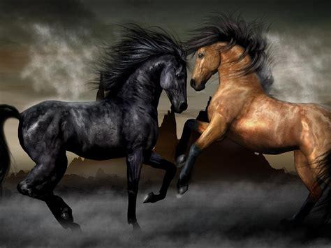 horses black  brown wallpapers hd wallpaperscom