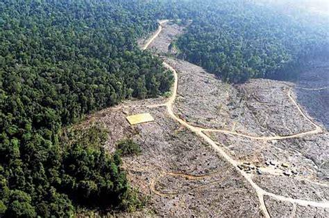 Hängesessel Amazonas by Nadie Sabe Cu 225 Nta Selva Amaz 243 Nica Ha Sido Destruida