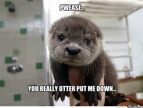 Otter Meme - otter meme center otters thats right they get their