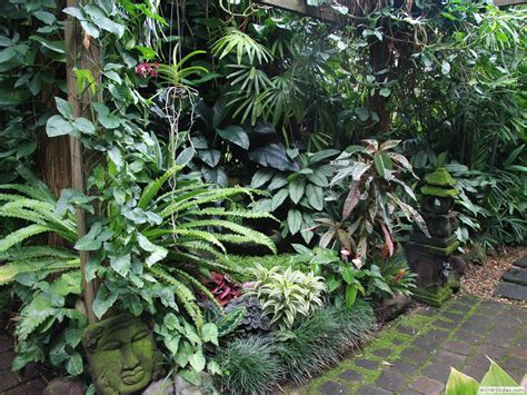 tropical plants for backyard tropical garden image gallery dennis hundscheidt