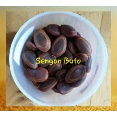 Bibit Sengon Buto jual benih sengon buto