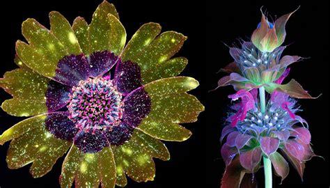 imagenes flores extraordinarias fotos capturam as luzes invis 237 veis que flores e plantas emitem