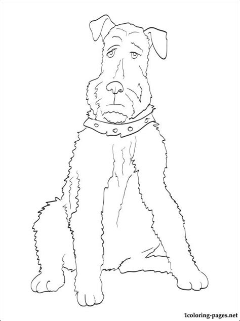 Airedale Terrier Coloring Page Coloring Pages Terrier Coloring Pages
