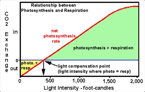 Light Compensation Point biology 10 topic 9 how plants work
