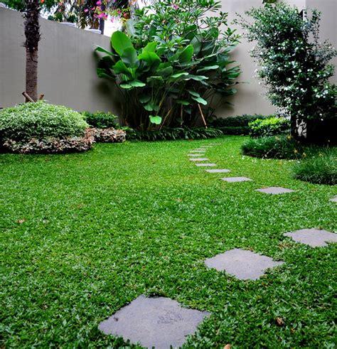 Harga Bibit Rumput Gajah Mini jual rumput gajah mini di bandung www stewartflowers net