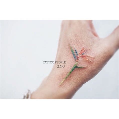 birds of paradise tattoo best 25 bird of paradise ideas on