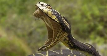 Home Design 3d For Macbook scatta selfie con serpente a sonagli ora rischia l