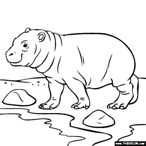 baby hippo coloring coloring pages