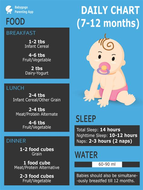 how much to feed a per day chart how much water should my 7months 15days drink per day