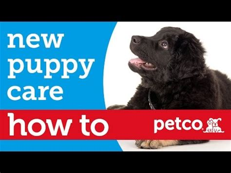 how to care for a new puppy how to care for your new puppy petco petco community 64126