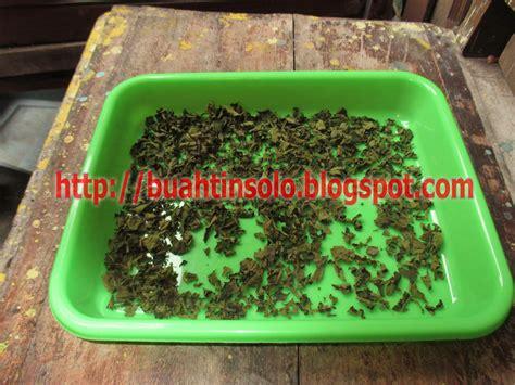 Teh Daun Tin Tubruk Teh Daun Tin Celup teh daun tin herbal untuk mengatasi sakit batu ginjal toko herbal tokoherbalsolo