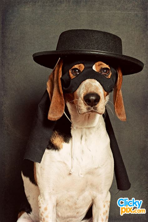 dogs wearing hats dogs wearing hats 23 clicky pix