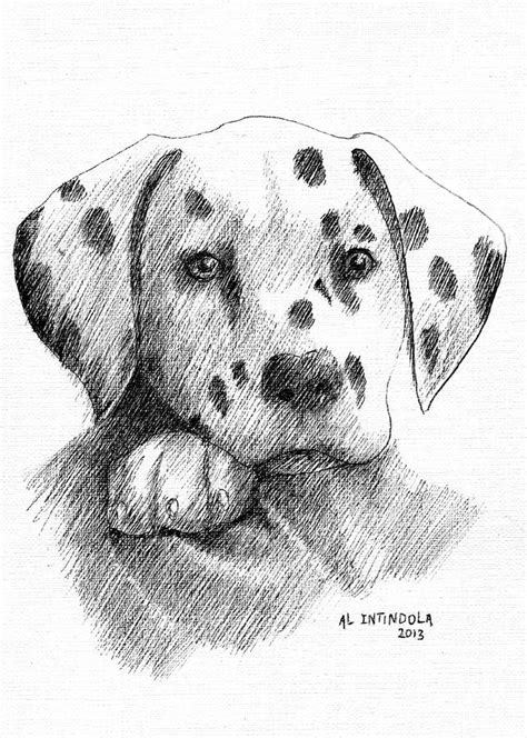 how to a dalmatian how to draw a dalmatian puppy hairstyles