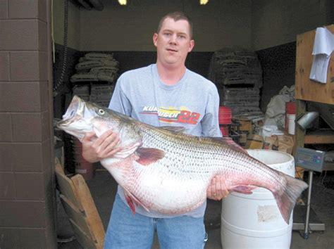 Missouri Record Missouri State Record Striped Bass