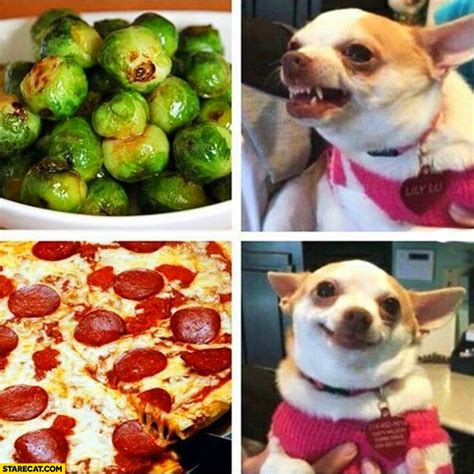 dogs brussel sprouts brussels sprouts barking pizza happy starecat