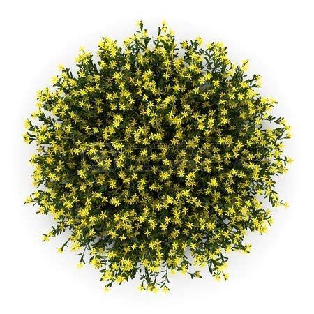 Flowery Top bush plant png buscar con plant top view top