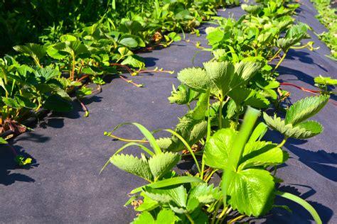 Garten Pflanzen Gute Nachbarn by Mischkultur 187 Definition Beispiele Gute Und Schlechte