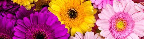 www fiori it fiori per la mamma trova quelli perfetti per