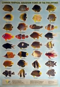 types of aquarium fish the gallery for gt types of tropical aquarium fish