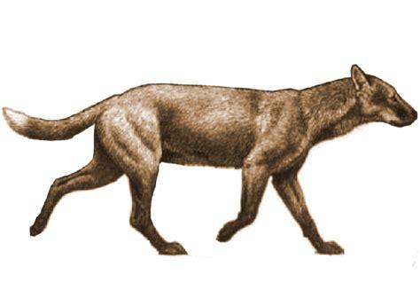 extinct dogs extinct canis lupus hominis